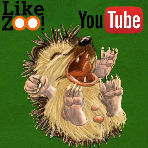 Mole meets a Hedgehog Like ZOO!