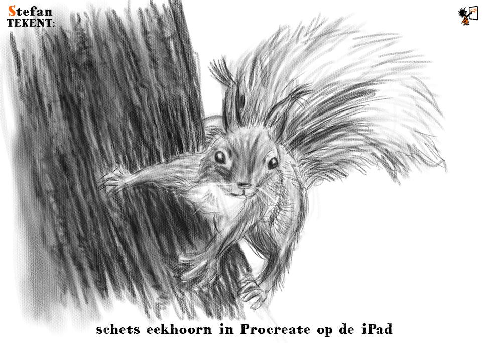 StefanTekent-Eekhoorn-boom-schets-Procreate