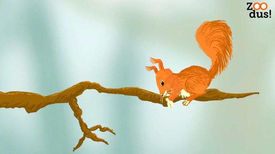ZOODus-Eekhoorn-boombalans
