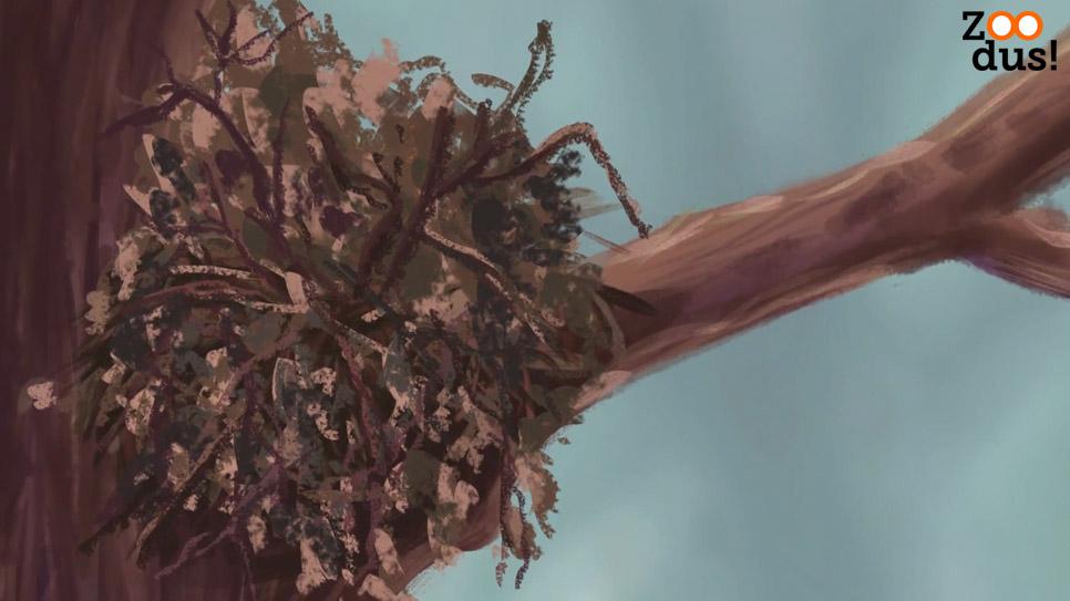 ZOODus-Eekhoorn-nest-boom