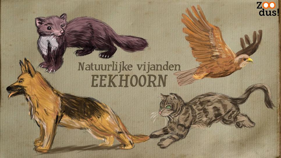 ZOODus-Eekhoorn-vijanden