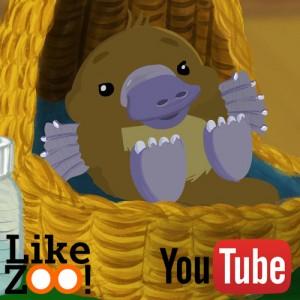 Like ZOO! Baby Platypus